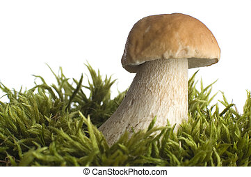 mushroom close-up on white background
