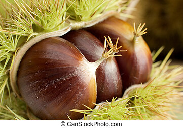 chestnut with spikey outer shell close-up
