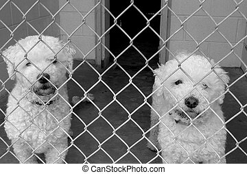 Pound puppies - Two puppies available for adoption