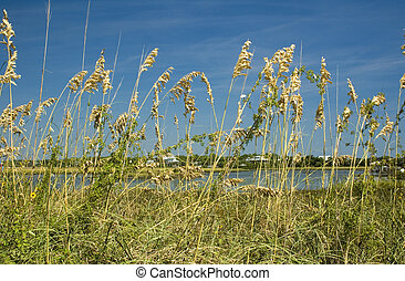 Sea Oats Cedar Key - Sea Oats and Wildflowers on Cedar Key