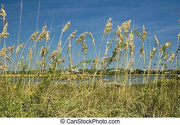 Sea Oats Cedar Key - Sea Oats and Wildflowers on Cedar Key