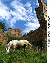 Horse and ruins - Wild horse and ruins of a fortress in...