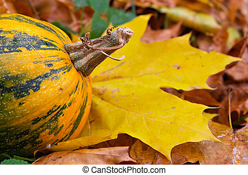 Tail of a yellow pumpkin - Maple foliage and pumpkin-yellow...