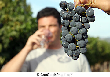 Wine tasting - Grape cluster and blurry young man drinking...