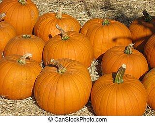 Pumpkins at Farm - Bright orange pumpkins at pumpkin farm
