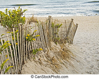 Dunes and Fence - A fence, sand dunes and goldenrod along...