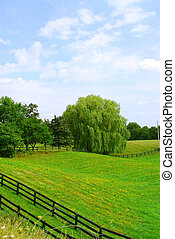 Rural landscape with lush green fields and trees