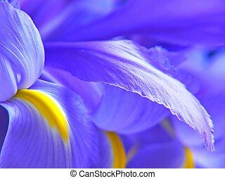 Irises - A bunch of blue flag irises.