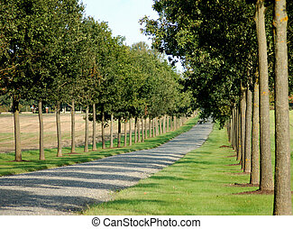 avenue - a line of trees with a road in the middle