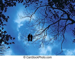 Two birds on a dead branch- blue sky