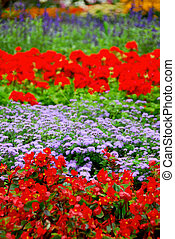 Blooming garden - Colorful blooming flower garden with...
