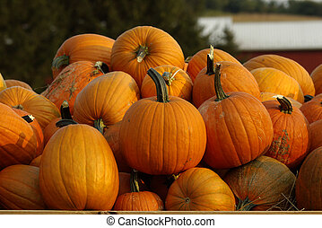 Pumpkins - Collection of pumpkins at local farmers market
