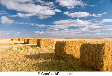 Square hay bales - Ripe square hay bales ready for use