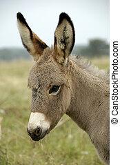 Baby Donkey - 2 week old baby donkey on the farm