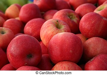 Gala Apples - gala variety of apples on display at a...