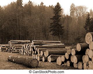 corte, árboles