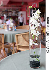 White flowers - Tropical white flowers in a vase on a...