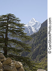 Himalayan fir and mountain - View at a mountain with...