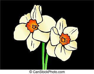 daffodils - illustration of spring daffodil flowers against...