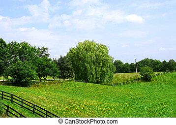 rural, paisaje