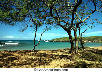 Shaded Tropical Cove - Dixie Maru Cove on the beautiful...