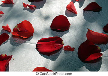 Rose Petals on White - Red Rose Petals on a White tablecloth...