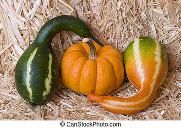 Pumpkin and gourds - A pumpkin and gourds on a bale of hay