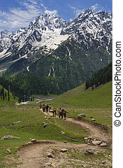 Heading to mountains - Four men and four horses follow the...