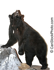 Black Bear - Isolated black bear on a rock