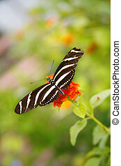 Butterfly - Beautiful butterfly species perched on a flower