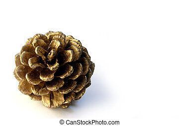 pine cone over white background