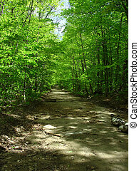 Dirt Road - a dirt country road in the spring
