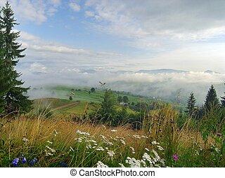 Mountainous meadow 5 - Beautiful mountainous glade overgrown...