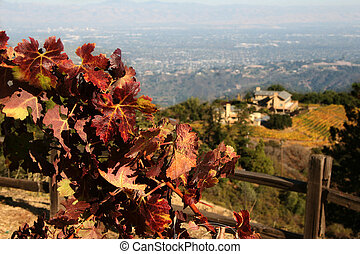 Autumn winery - Autumn grape leaves at California winery...