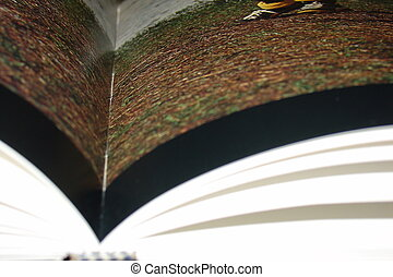 Pages of a book in close