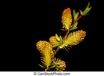 Plant - Well isolated plant over black background