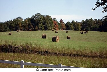 Lots of Hay - A field full of rolled up hay on a sunny...