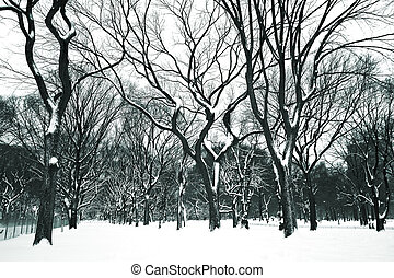 Snow Day - New York\\\'s Central park covered in snow after...