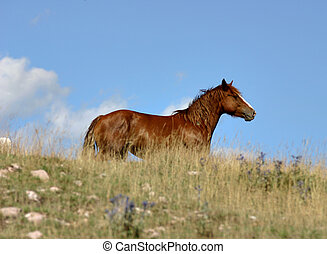 brown horse in italy