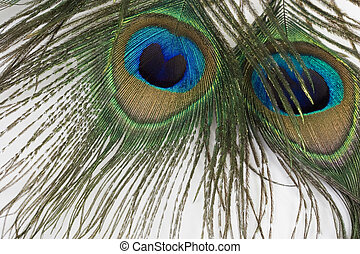 Scary Eyes - Peacock feathers; Extreme close-up, Focus on...