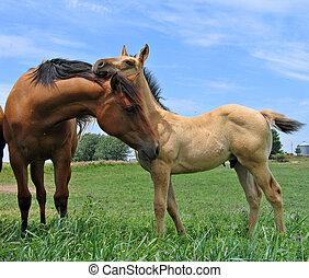 cuarto, caballos