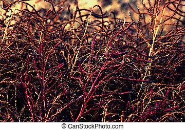 Weeds - purple weeds