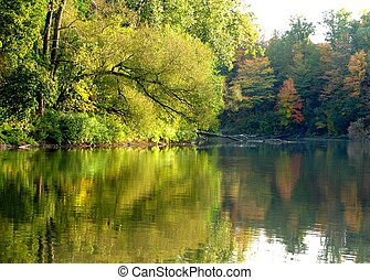 River Reflections - Shore with trees reflected on the...