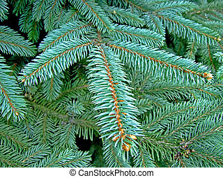 Christmas tree pins - Close-up shot of Christmas pine branch