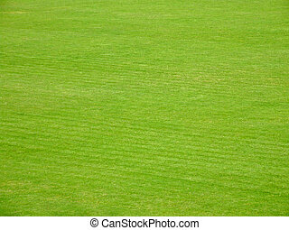 Soccer terrain - Green grass on soccer terrain