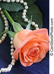 Rose and Pearls - Close up of apricot colored rose with...