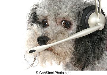 cliente, servicio, Poodle