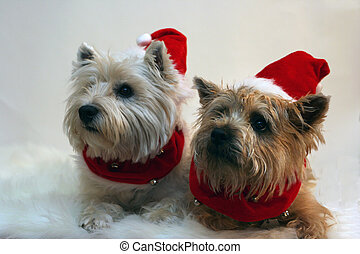 Terrier Santa Claws - 2 terriers dressed up as Santa Claus