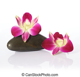 Orchid and River Stones Agianst White Background