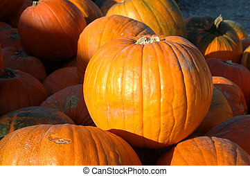 Pumpkins in a pile outdoors with sunlight and shadows.